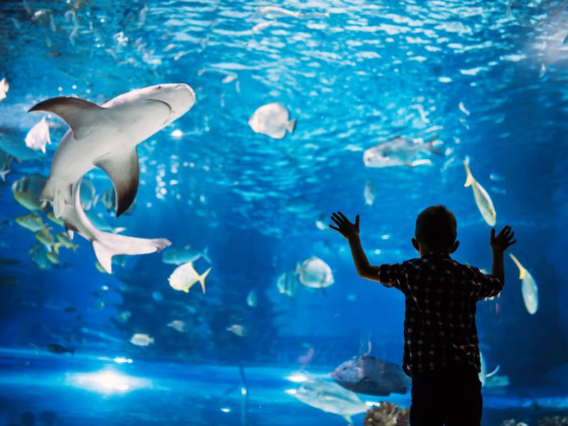 kid in front of aquarium glass wall